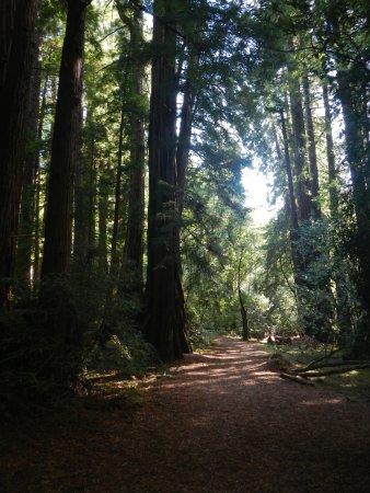 มิลล์แวลลีย์, แคลิฟอร์เนีย: as pathway through the woods