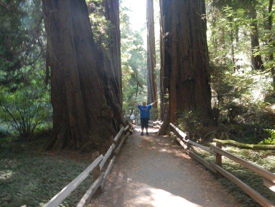 มิลล์แวลลีย์, แคลิฟอร์เนีย: a pathway