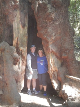 Mill Valley, Californien: a huge tree