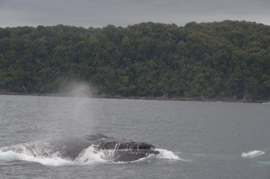 Dominical, Costa Rica: humpback