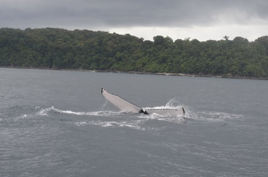 Dominical, Costa Rica: humpback fin