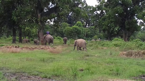 Sauraha, Nepal: This photo was from chitwan national park