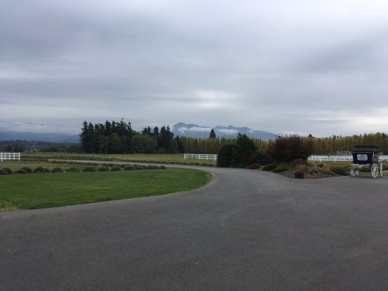 Port Angeles, WA: Very cloudy day and lavender out of season, cheap camera - still beautiful view.