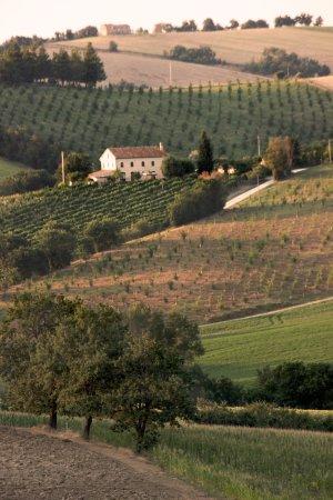 Montecarotto, Italia: il casale immerso nelle colline marchigiane
