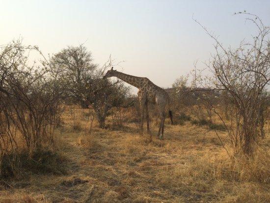 Savute Safari Lodge: Self-service at a higher level