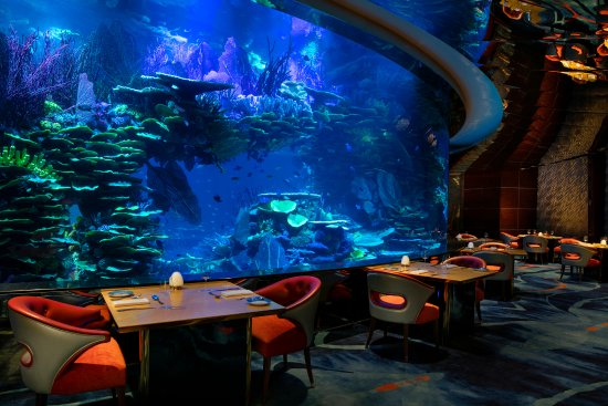 al mahara dubai restaurant reviews phone number