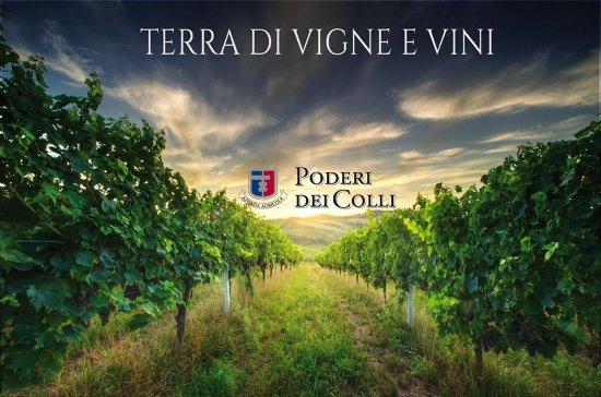 Montalto delle Marche, Италия: Foto vitigno