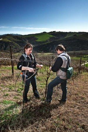 Montalto delle Marche, Italia: La famiglia alle prese con la potatura