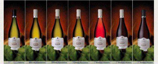 Montalto delle Marche, Italia: I nostri vini