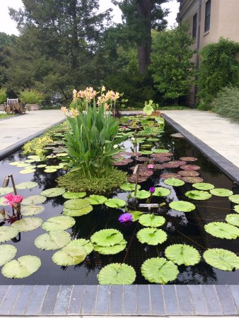 Kennett Square, Pensilvania: Lily gardens outside of the conservatory