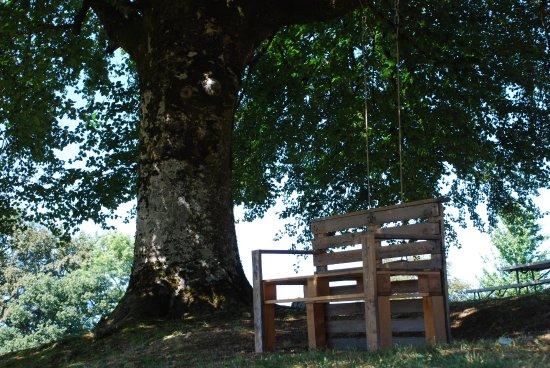Liginiac, Frankrig: genieten van uitzicht onder de beukenboom