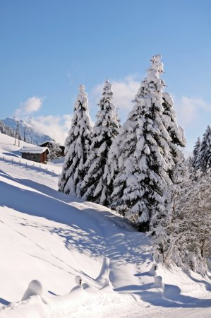 Almhof Roswitha: Schnee