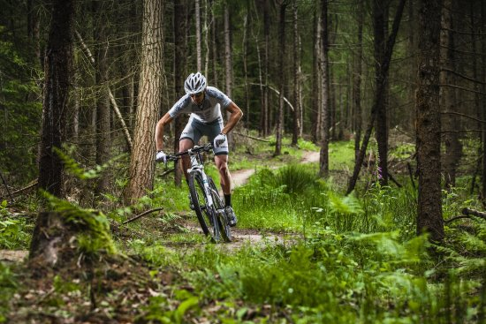 Ross-on-Wye, UK: Great choice of outdoor activities in the Forest of Dean