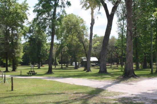 Branford, ฟลอริด้า: Primitive tent camping area