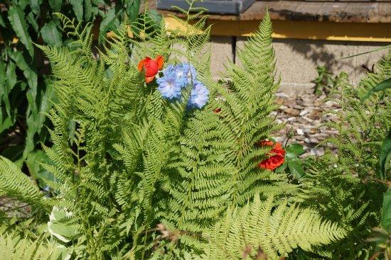 Wabasha, MN: Our front garden