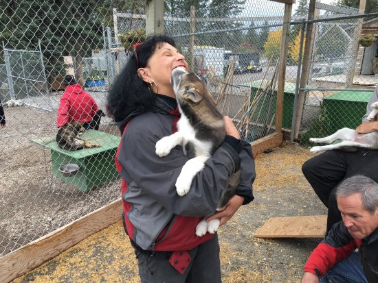 Snowy Owl Sled Dog Tours: What a wonderful experience!  These folks know what they are doing and LOVE their dogs!