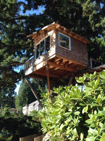 Woodinville, WA: view of tree house from below