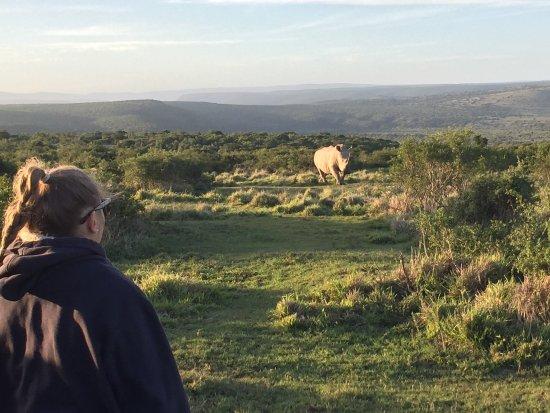 Amakhala Game Reserve, Afrique du Sud : photo0.jpg