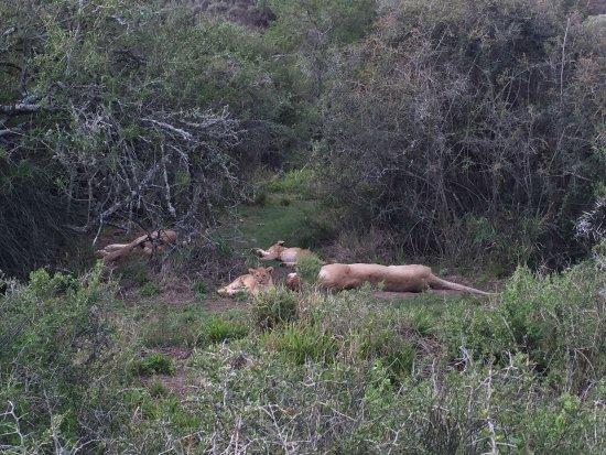 Amakhala Game Reserve, Afrique du Sud : photo3.jpg
