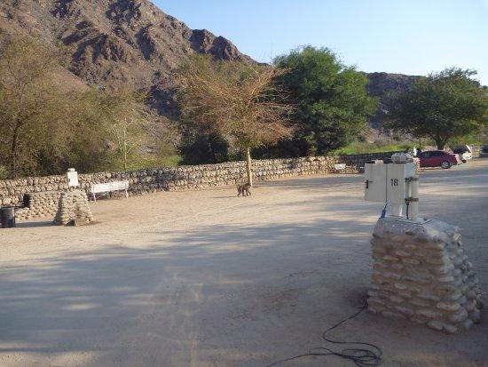 Fish River Canyon, Namibia: Achtung Paviane auf Suche - man sollte immer einen Knüppel dabei haben