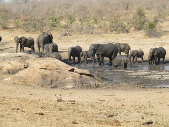 George, Afrika Selatan: Elephants came for a bath