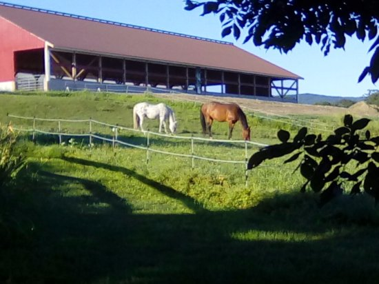 Williamstown, MA: Morning horses