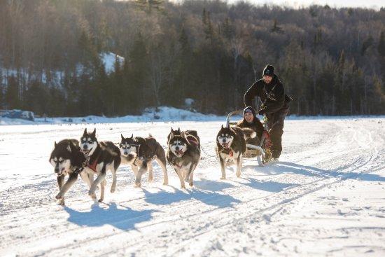 Saint Hippolyte, Canadá: Traineau à chiens