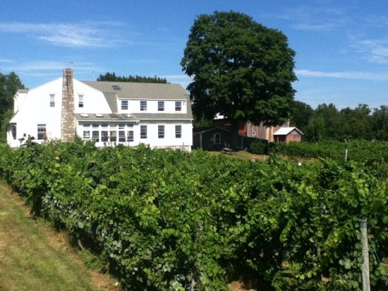 Bozrah, CT: Summer at the Vineyard