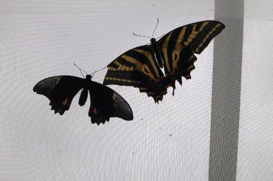 Woodstock, UK: butterflies