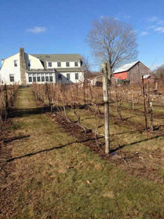 Bozrah, CT: Spring, the grass starts to green,the sun turns warm and the vines wake up