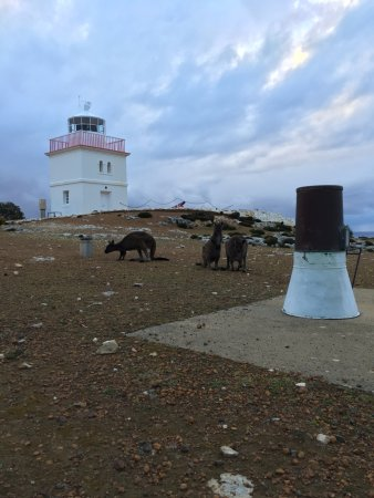 Flinders Chase, Australia: Cape Borda Lightstation with the locals