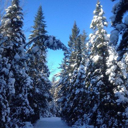 Saint Hippolyte, Canada: Sentiers et forêts enneigés