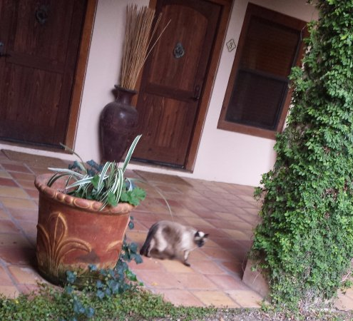 Medina, TX: Another cat in courtyard