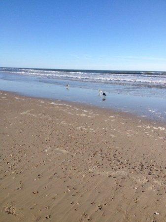 Carova Beach照片
