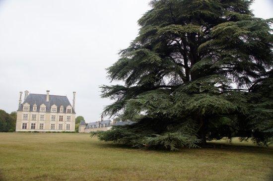 Cellettes, Francia: prachtige oude dennebomen