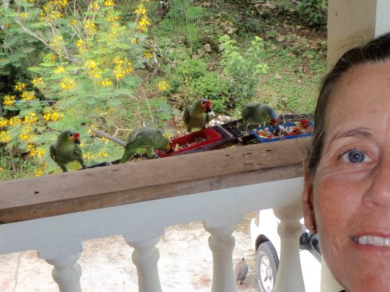Belmopan, Belice: On the porch during mealtime for the birds!
