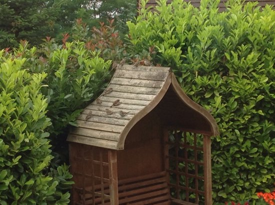Thaxted, UK: Garden view