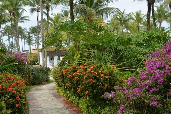 Hotel Transamerica Ilha de Comandatuba: Caminhos do hotel... sempre florido e impecável