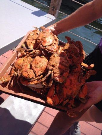 Grasonville, MD: Cangrejos cocinados