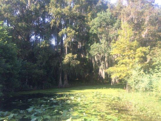 Saint Cloud, Флорида: photo1.jpg