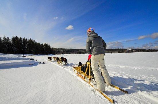 Sacré-Coeur-Saguenay, Kanada: Traineau à chiens