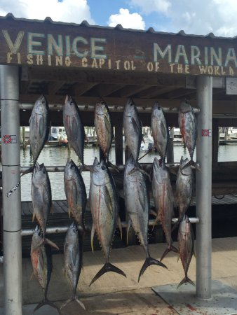 Venice, LA: Limit of Tuna by 10am