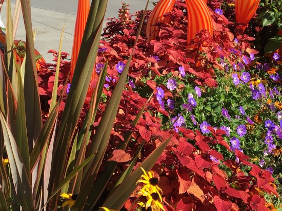 Chihuly Garden and Glass: photo4.jpg