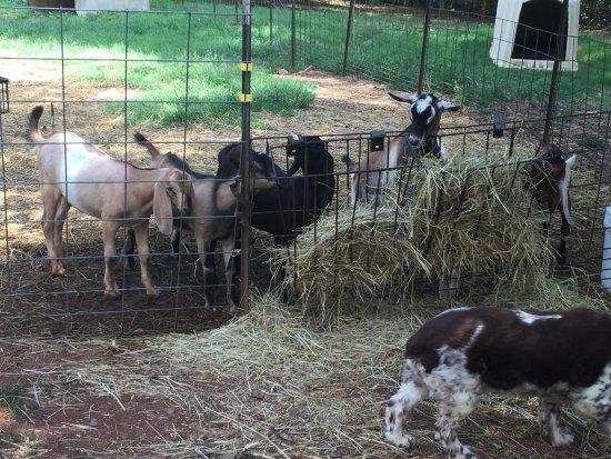 Split Creek Farm 사진