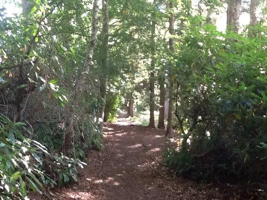 Nairn, UK: The woods...