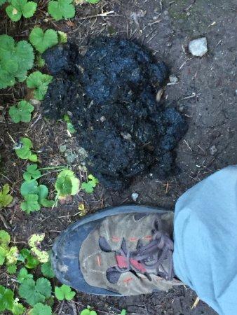 Wonderland Trail : Beware of bears!  and their poop:-)