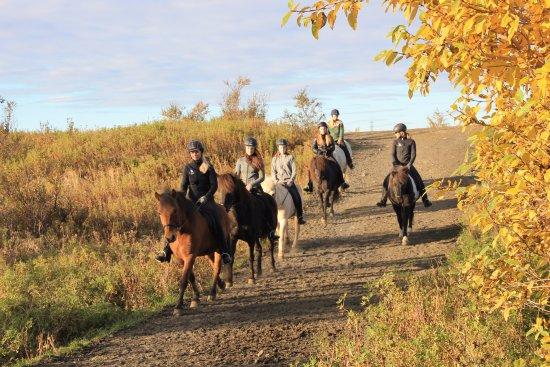 Hraunhestar Riding Tours