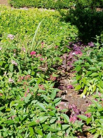 Manteo, NC: Elizabethan Gardens