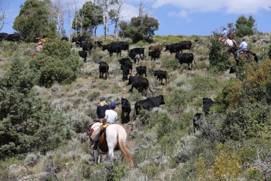 Mc Coy, CO: On the cattle drive ...
