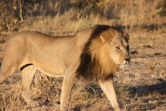 Chobe National Park Görüntüsü